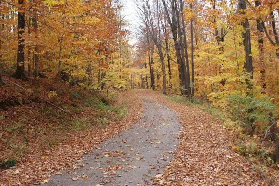 Sentiers en automne